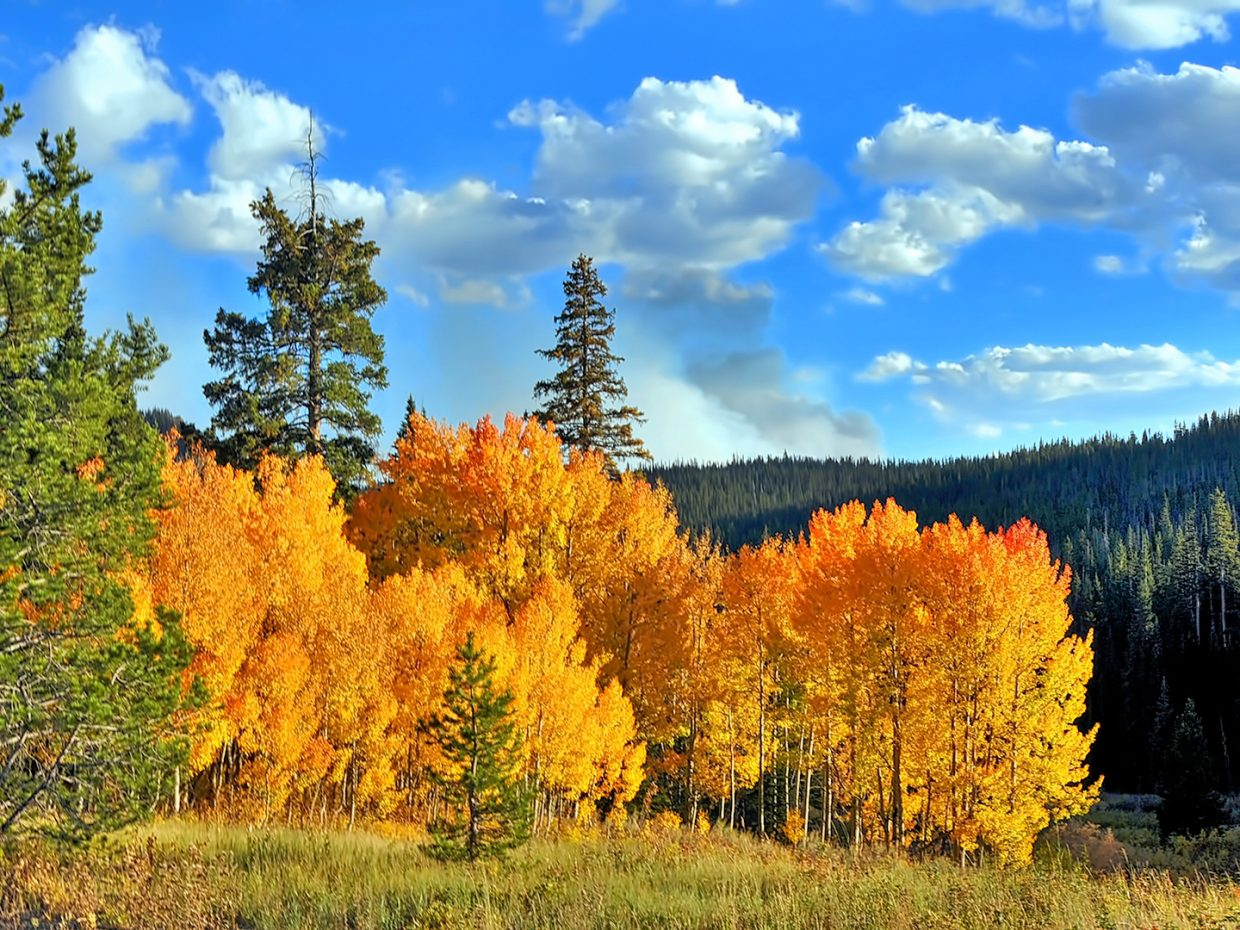 Happy Autumn on Rabbit Ears Pass!