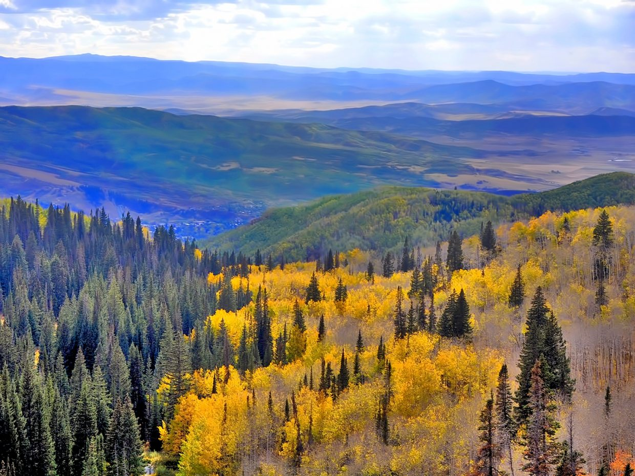 Buffalo Pass aspens.