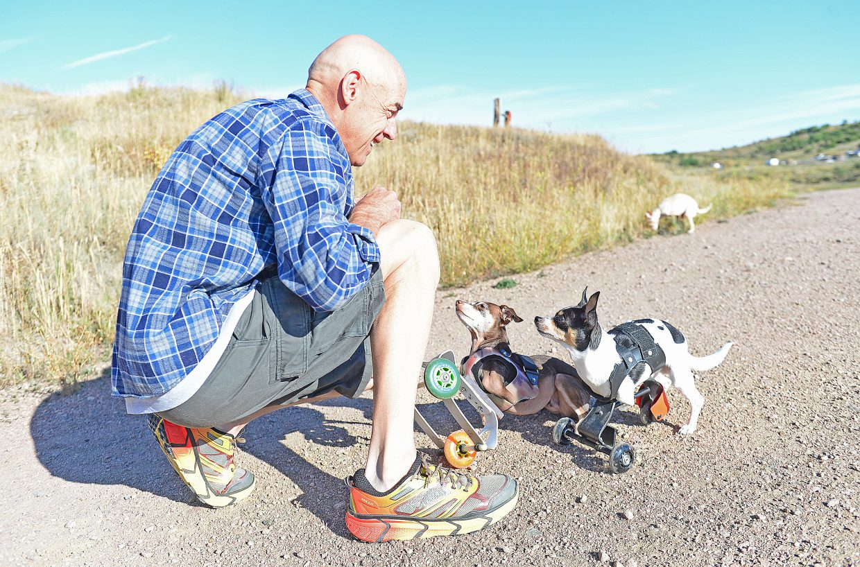 Ken Rogers plays with Deuce (front) and Gryffindor at his home in South Routt. Ken, and his wife Melissa, have adopted five dogs and two cats with disabilities. They use many of the dogs as therapy animals through the non-profit Colorado Comfort Canines, which the couple started three years ago,and locally with Heeling Friends.