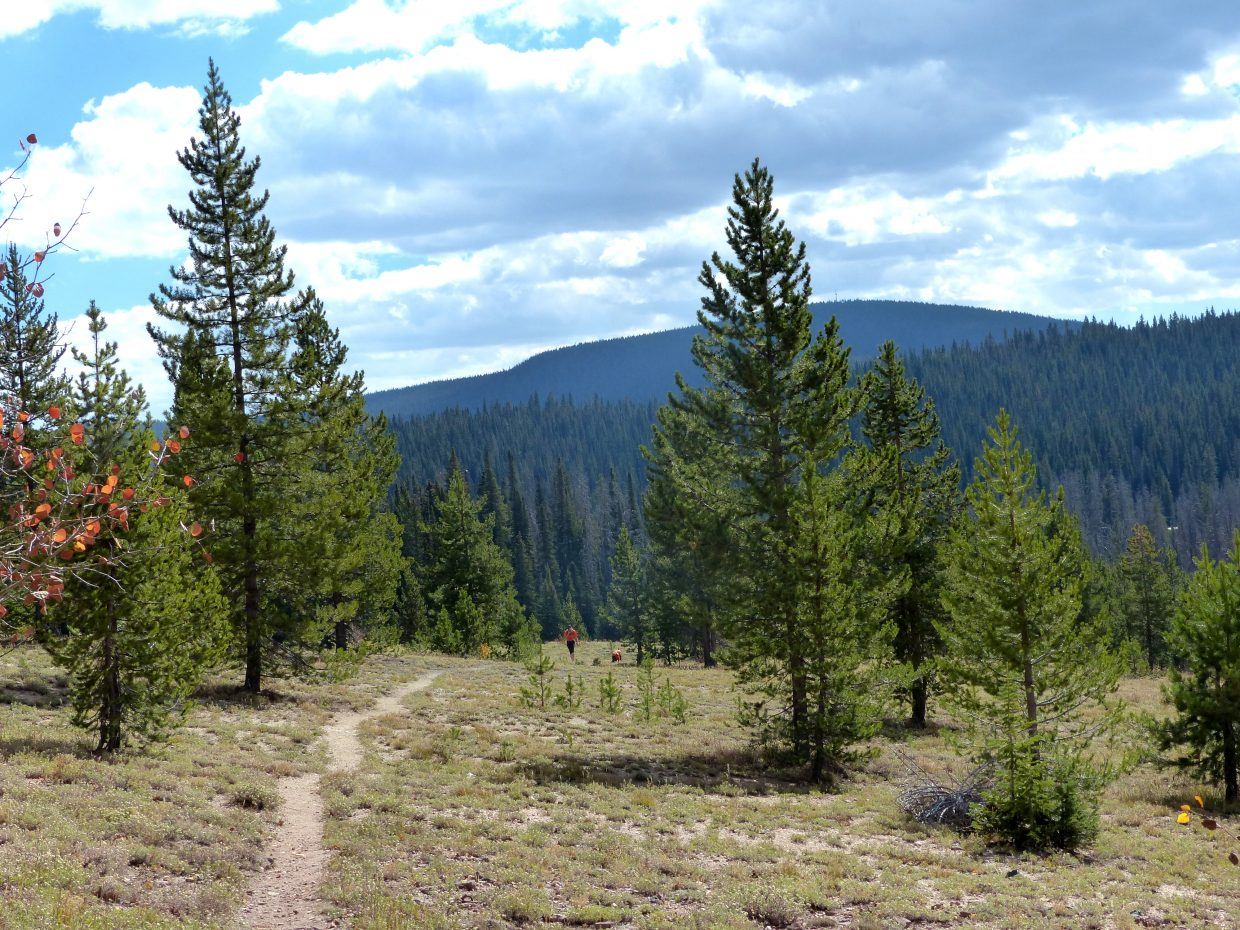 A girl and her dog walk along Rabbit Ears Pass in orange vests to stand out against the trees to bow hunters.