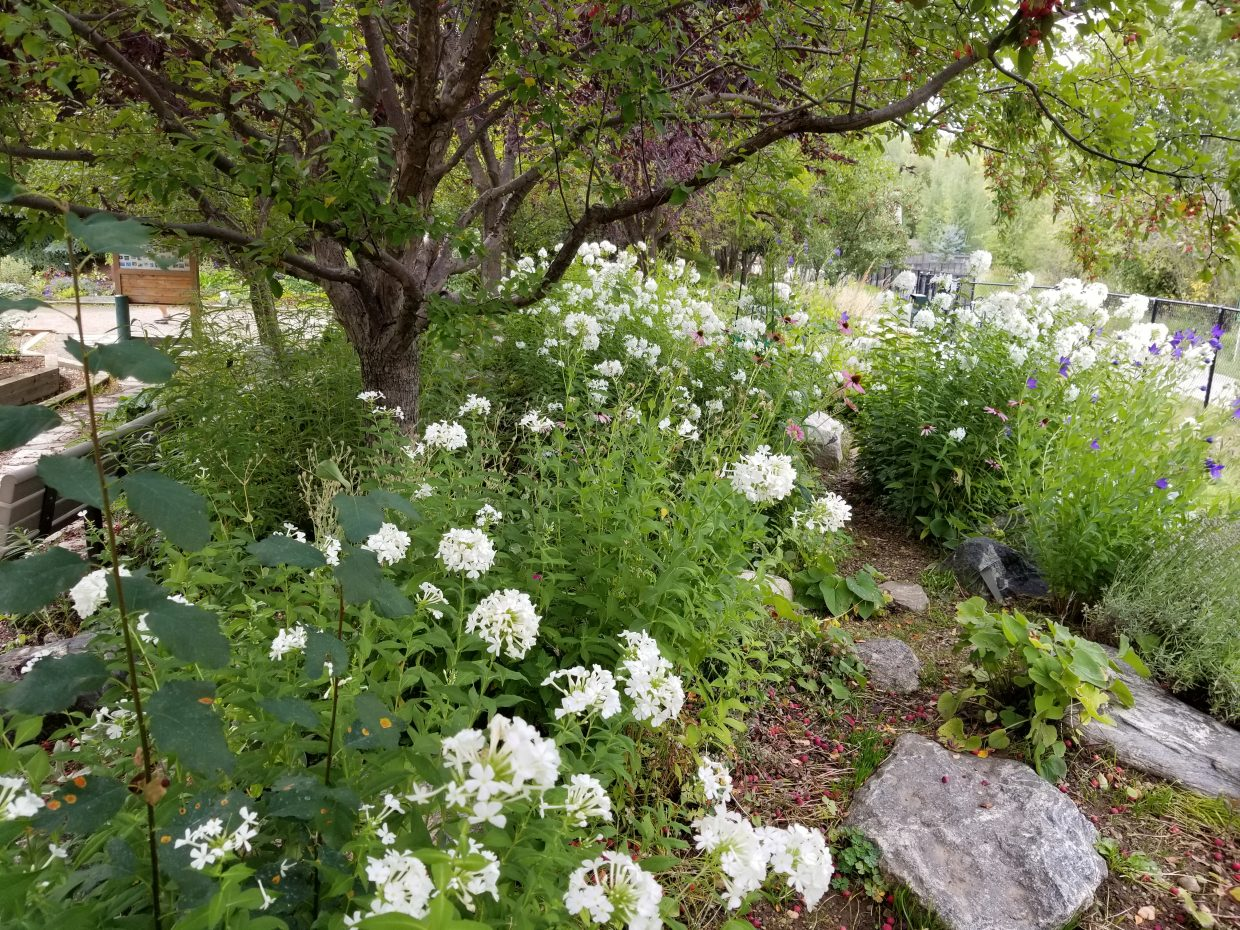 Flowers still bloom at the Yampa River Botanic Garden.