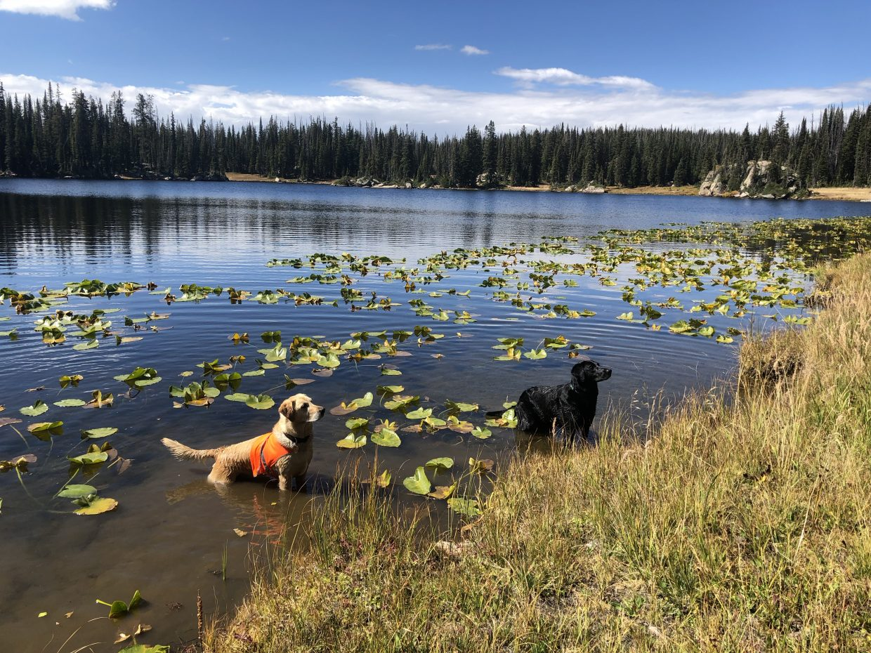 Dogs, Karma and Crispy, enjoy a beautiful day at Lake Dinosaur.