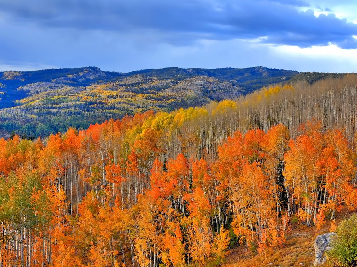 Vibrant orange hues cover Buffalo Pass.