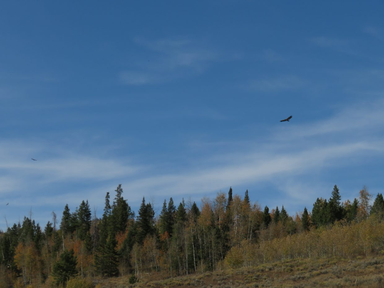 Bald eagle flies over Steamboat Lake at the state park.