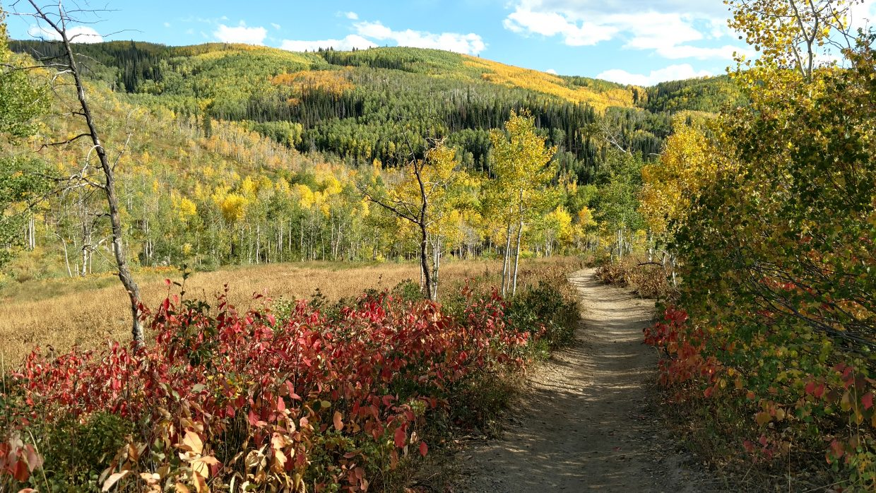 Flash of Gold Trail starts to live up to its name as fall arrives at Buffalo Pass.