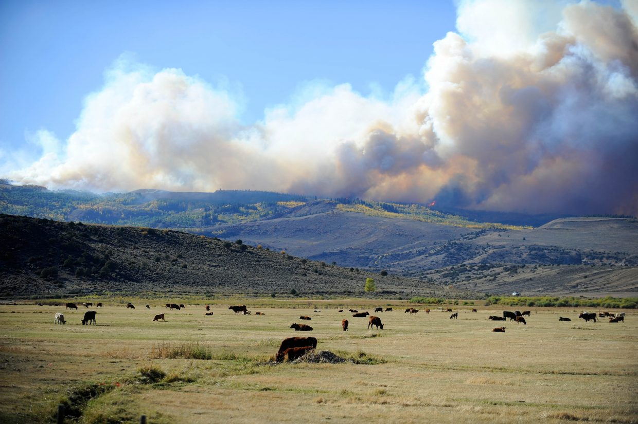 Cows eat in a pasture along the Silver Creek Fire.