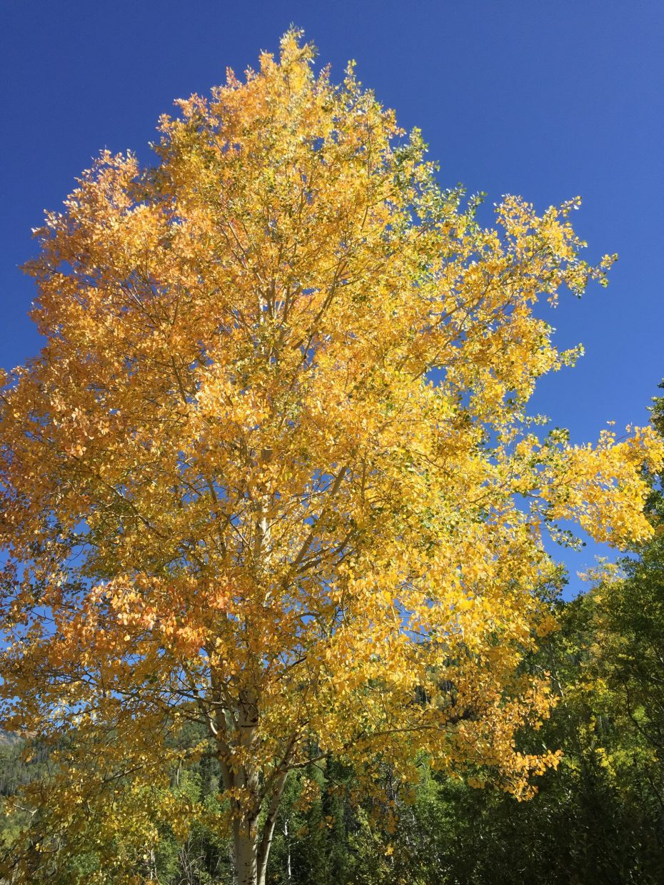 Never get tired of the beautiful fall colors in Routt County!