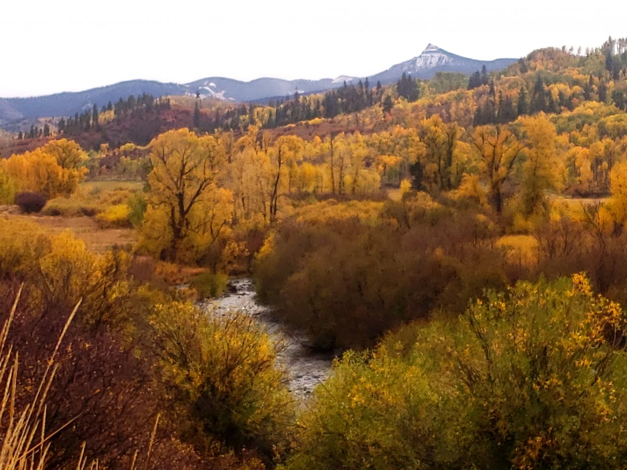 Fall Colors take over east of William's Fork.