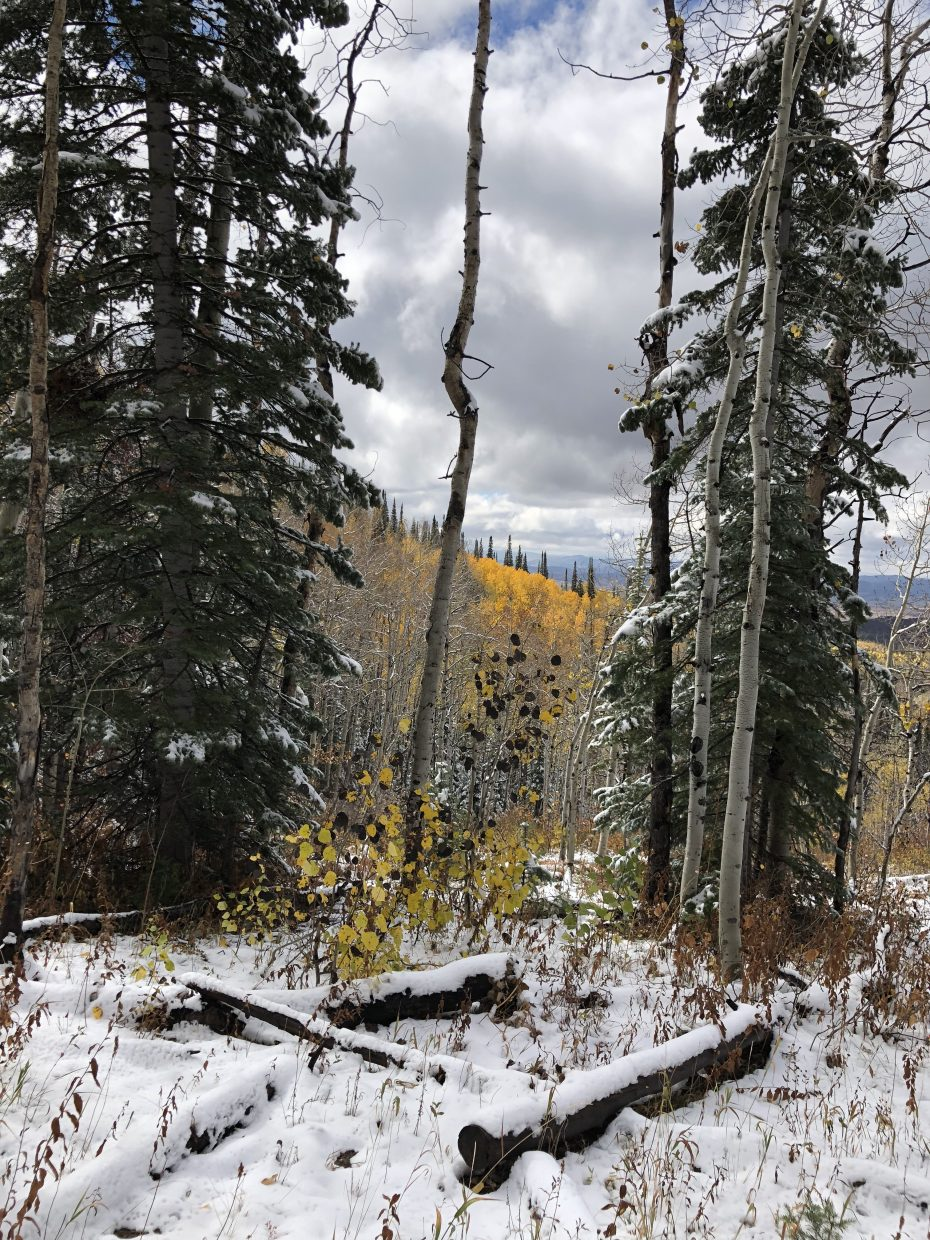 Snow covers parts of the Flash of Gold Trail on Buffalo Pass.