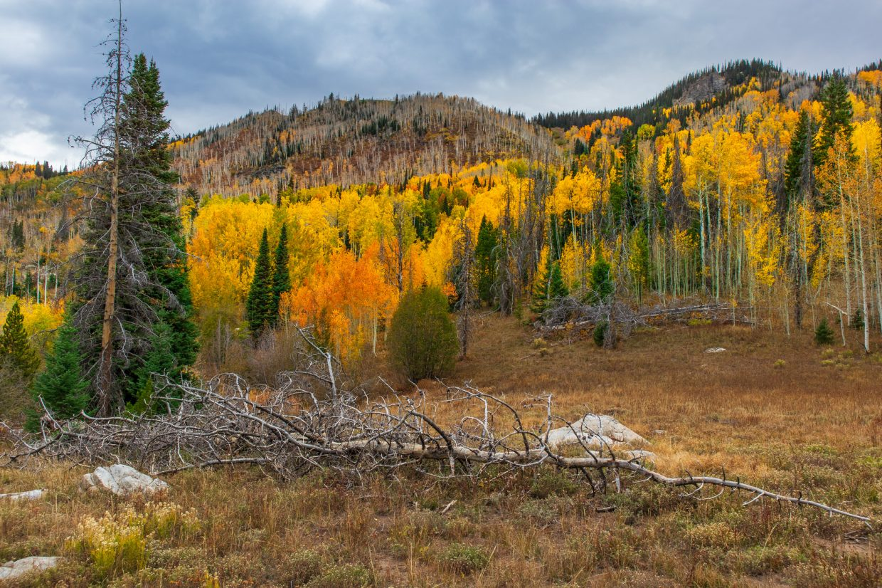 Here is a photo from the Gilpin Lake trail on Monday.
