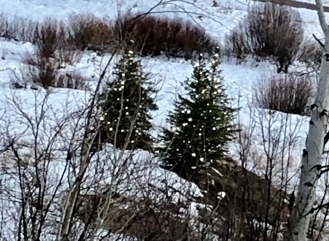 Christmas trees sit in the snow.