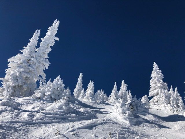 Trees on Storm Peak are fully snow-covered.