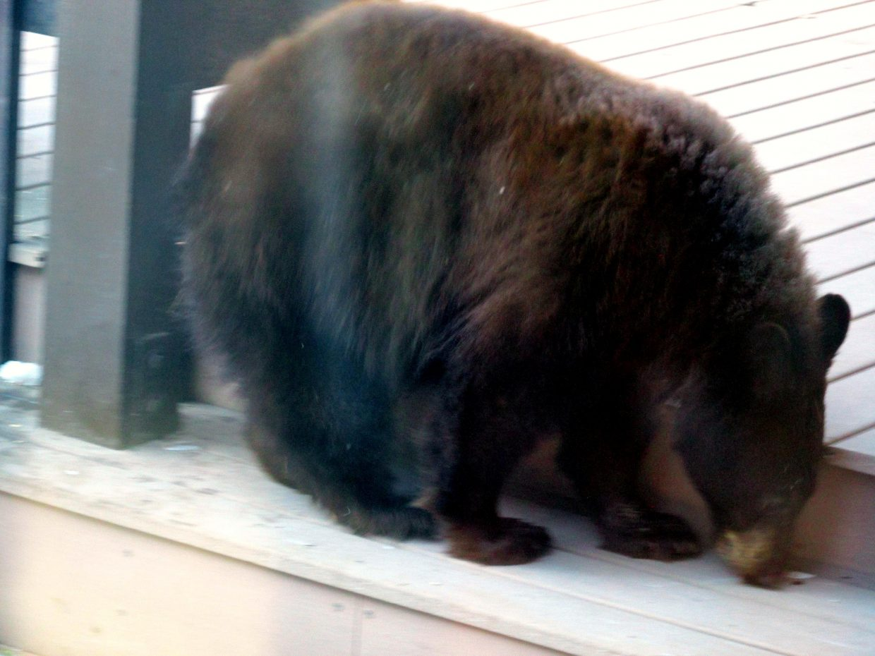 Bear on our deck eating bird seed