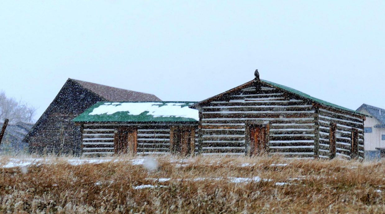 This hawk is perched on the Yock Family Homestead Cabin, near the More Barn in Steamboat Springs, closely watching the field in this weekend's snowstorm.