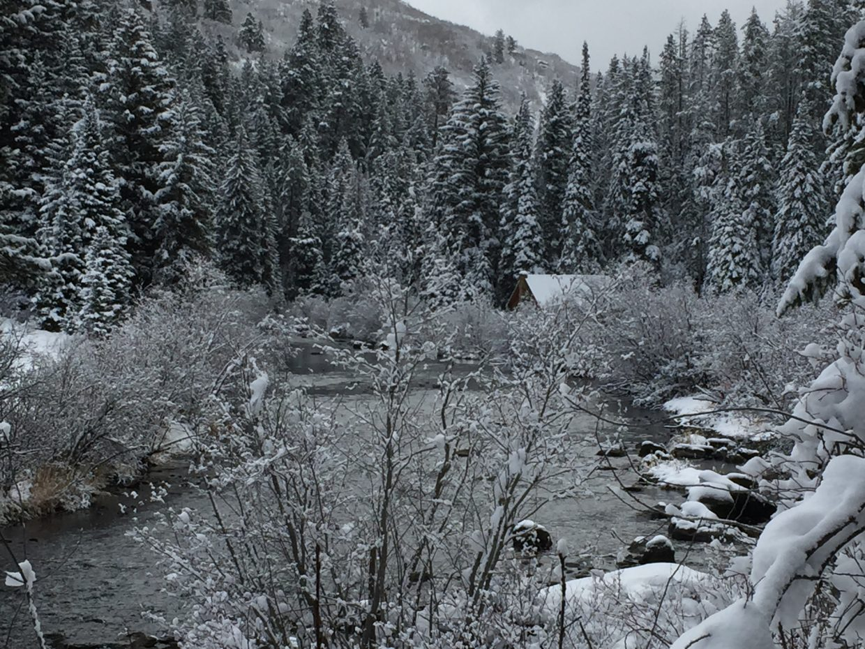 Snow covers up the Sarvis Creek area.