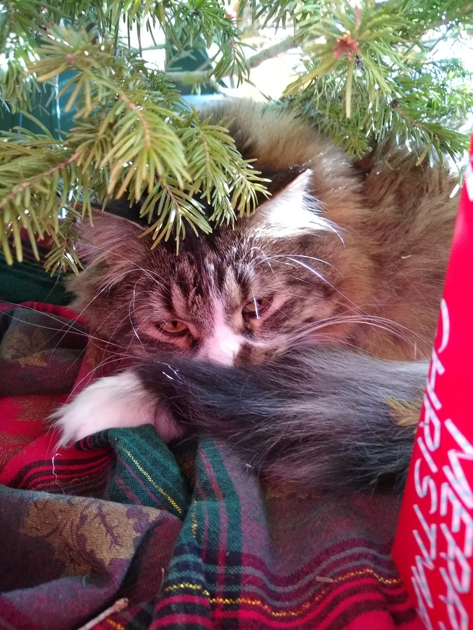 A cat hides underneath a Christmas tree.
