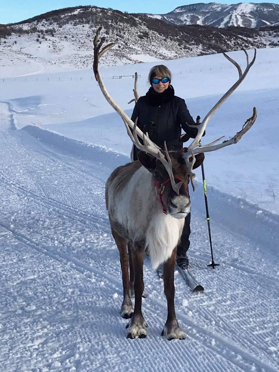 A woman skis with reindeer in Steamboat Springs.
