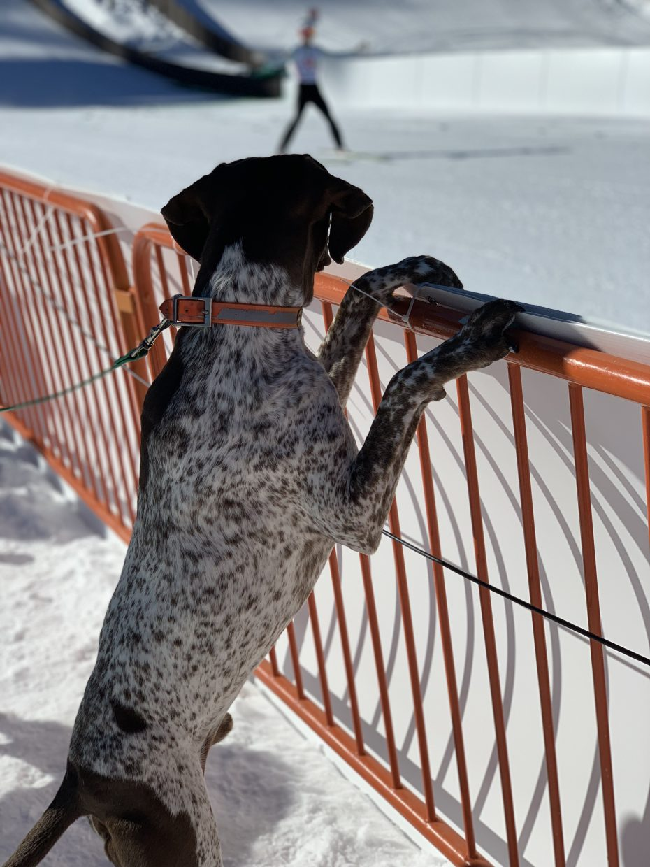Penny Fletcher's four-legged friend enjoyed the Continental Cup in Steamboat Springs