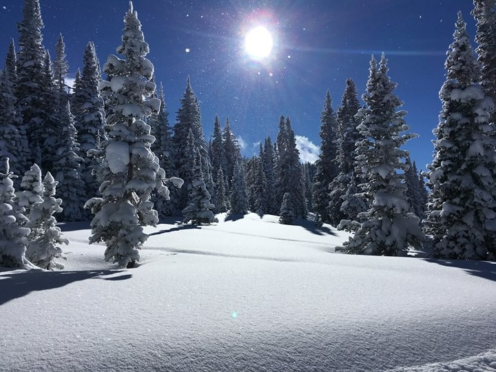 The sun shines brightly over snow-covered pines at Steamboat Resort.