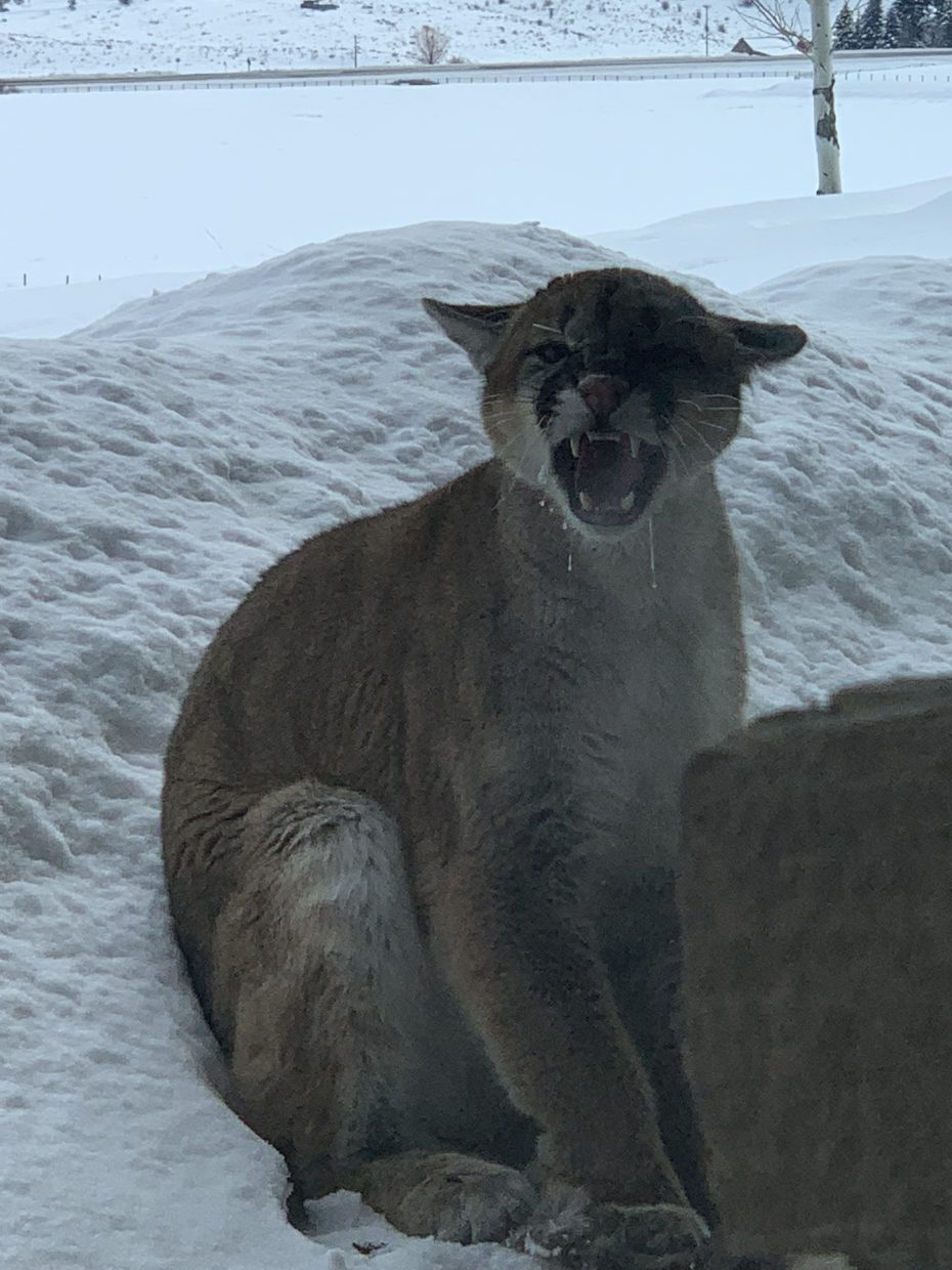 A stray in Routt County.