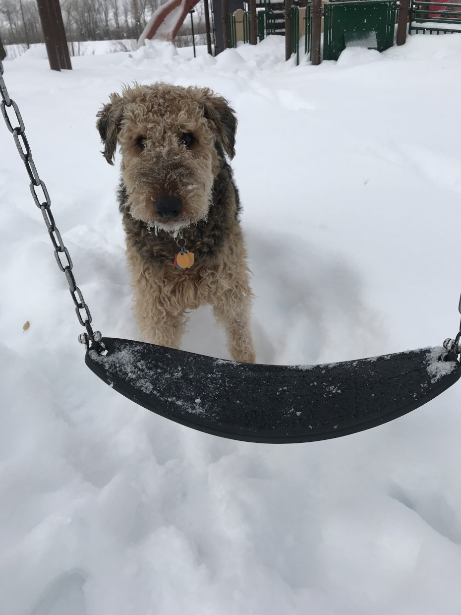 A dog contemplates hopping on a swing.