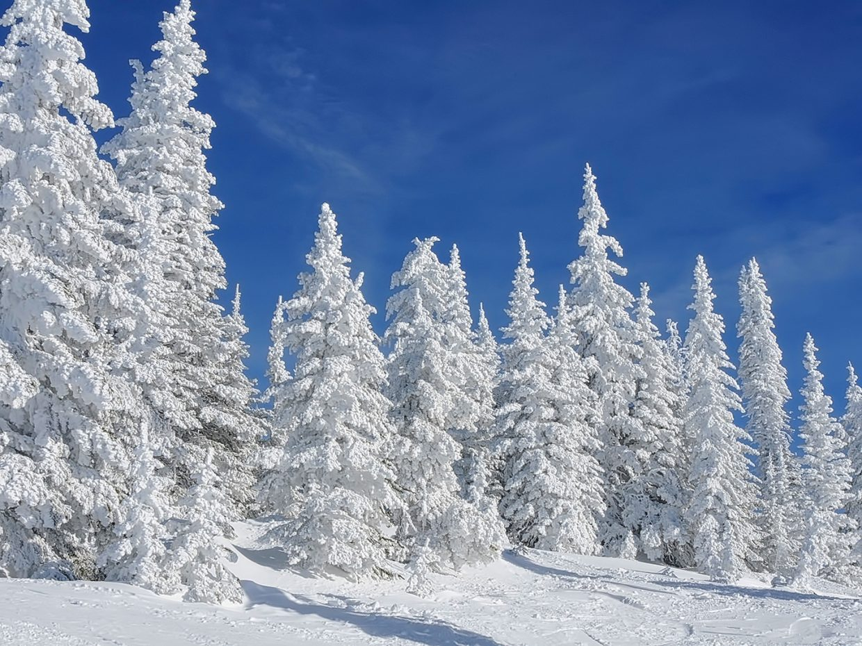 Winter Pines, Top of the Ski Area.
