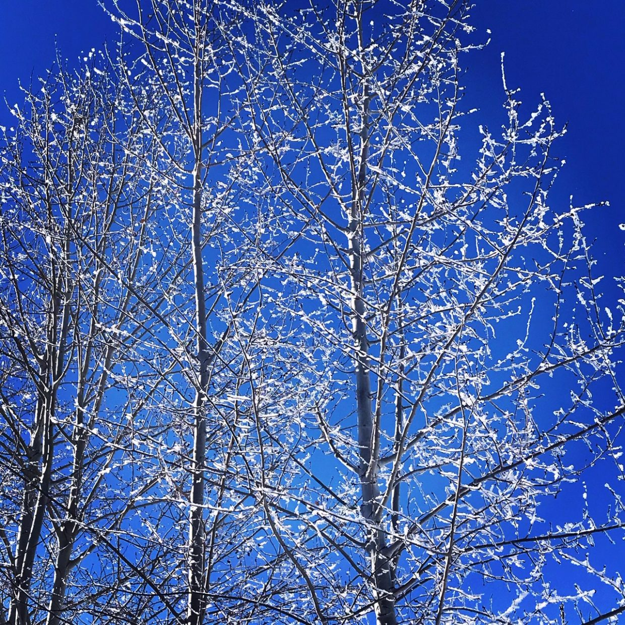 A visit from Jack Frost.
