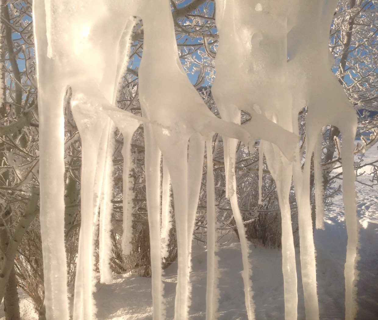 Winter nights & sunny days makes cool ice formations.