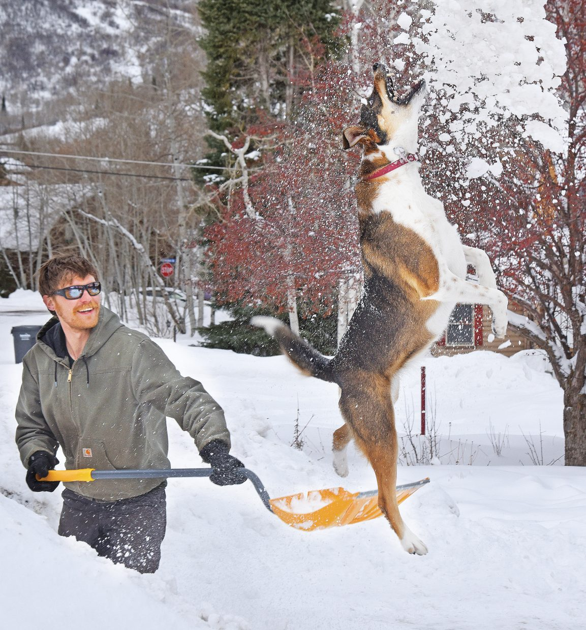 Ben Glassmeyer launches a shovel of snow into the air for Junebug while he was cleaning his driveway in downtown Steamboat Springs Monday.