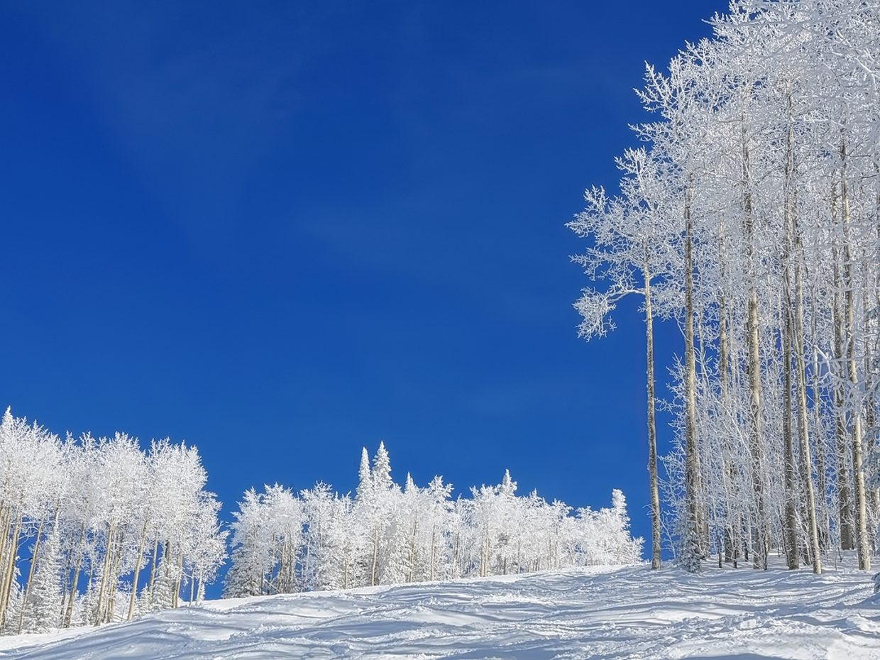 Snow-covered Aspens stand out starkly against a bright blue ski on Twister Ski Run at Steamboat Resort.