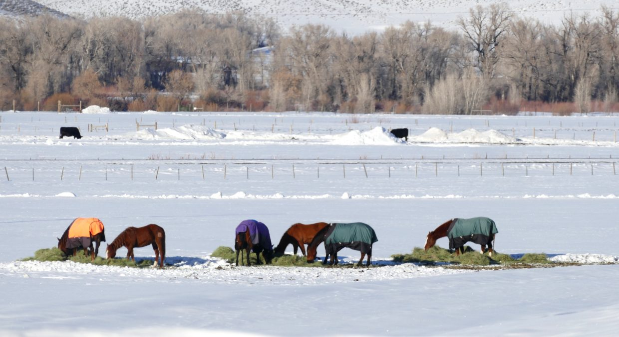 These horses were spotted along Hwy 40, between Hayden and Steamboat.