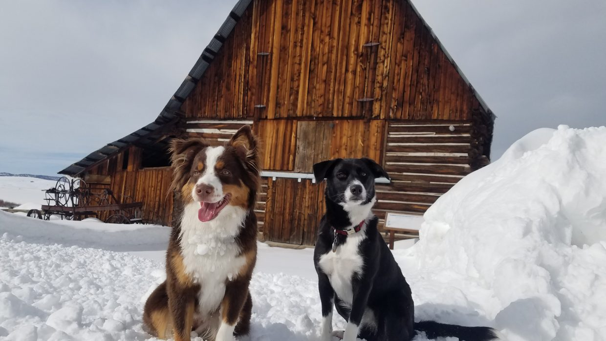 Hazie and Oakley playing in the snow.