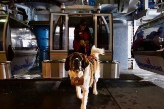 When the Saint comes barking in: meet Powder, Steamboat's safety dog