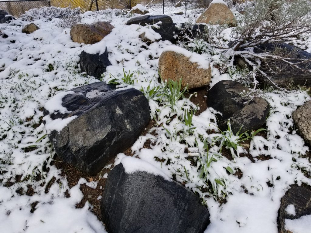 Though under a dusting of snow, the Yampa River Botanic Park is now open.