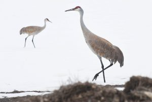 Crane Festival photo contest open for submissions