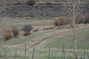 Routt County in photos: April 28 to May 4, 2019