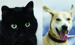 Routt County adoptable pets: Chatty the cat and McClain the dog