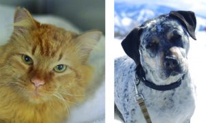 Routt County adoptable pets: Simon the cat and Crash the dog