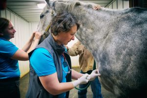 Keeping the stock safe: An inside look at the vets helping Steamboat Springs Pro Rodeo animals