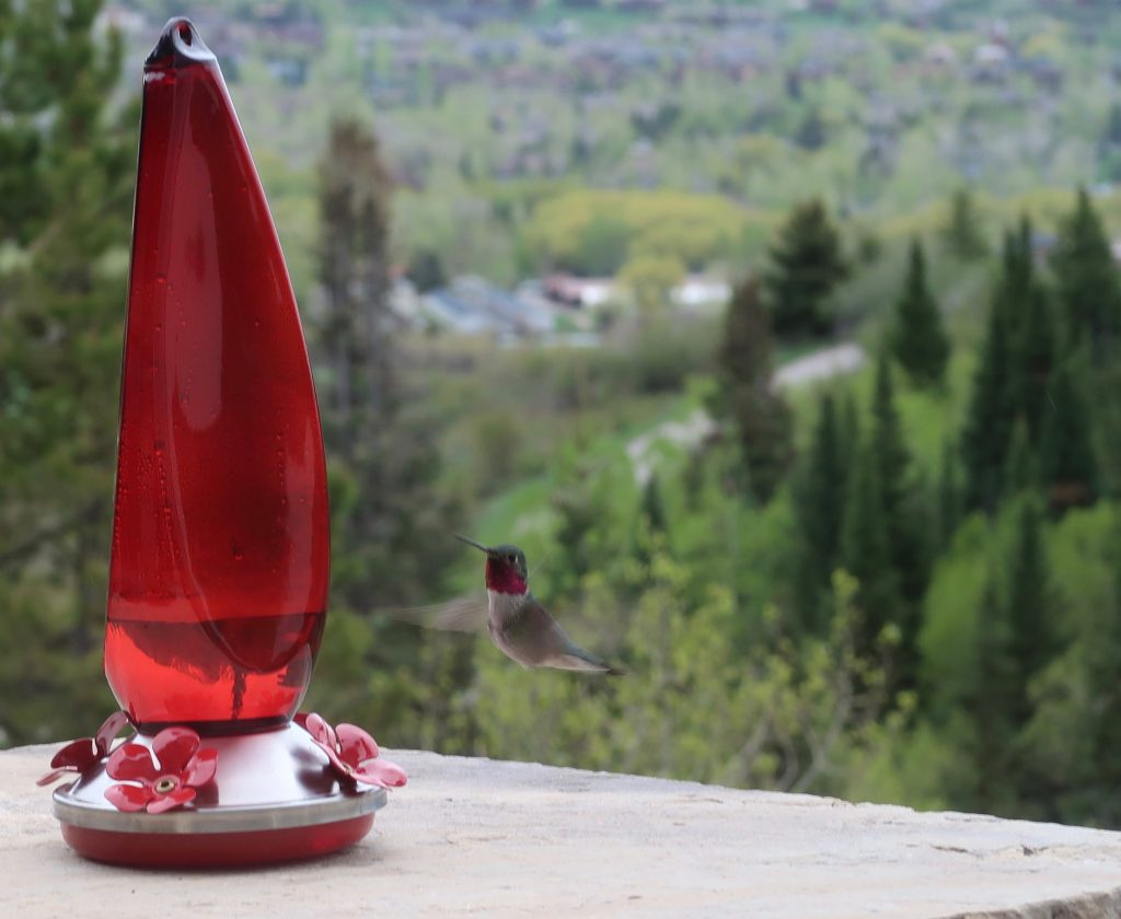 A hummingbird visits a feeder as the weather starts to clear in Routt County.