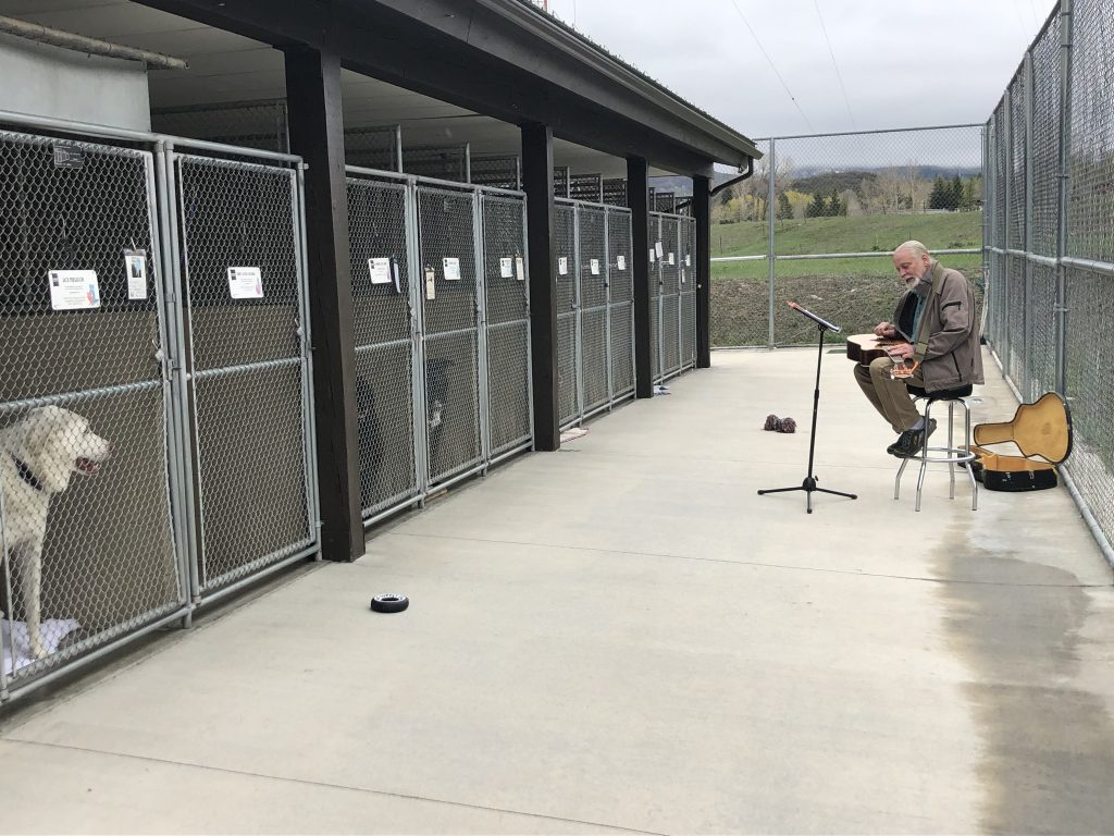 Routt County Humane Society seeks human musicians to play for canine audience