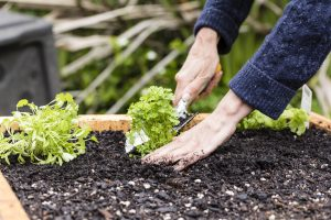 Tips for a successful gardening season at 7,000 feet