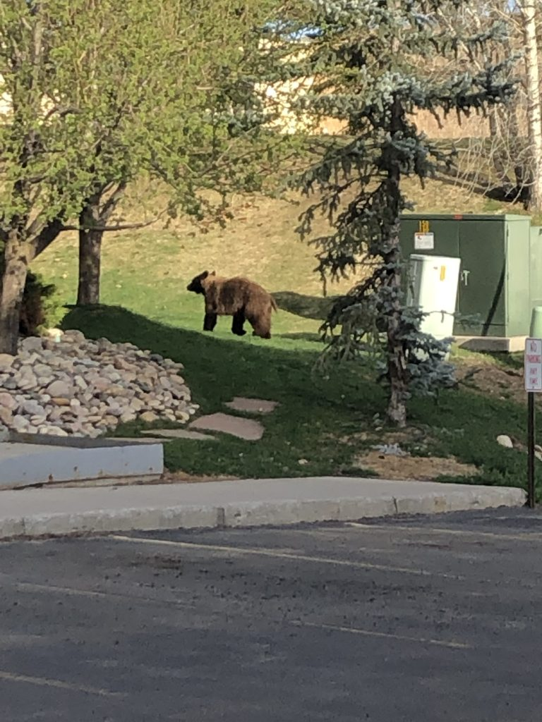 A bear visits the Pines on Sunday, May 12.