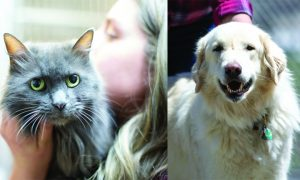 Routt County adoptable pets: Trapper the cat and Kane the dog