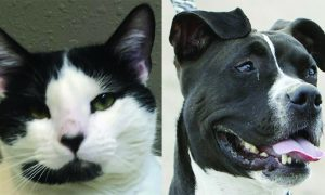 Routt County adoptable pets: Andouille the cat and Lolo the dog
