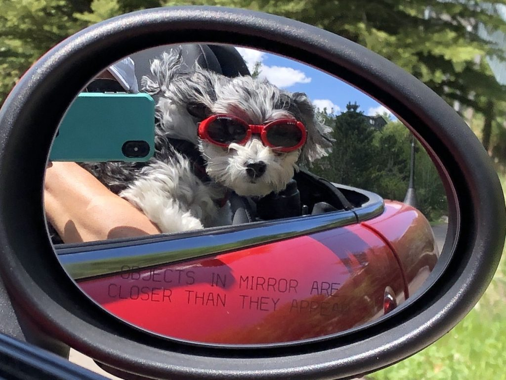 A dog enjoys a drive in Steamboat Springs.