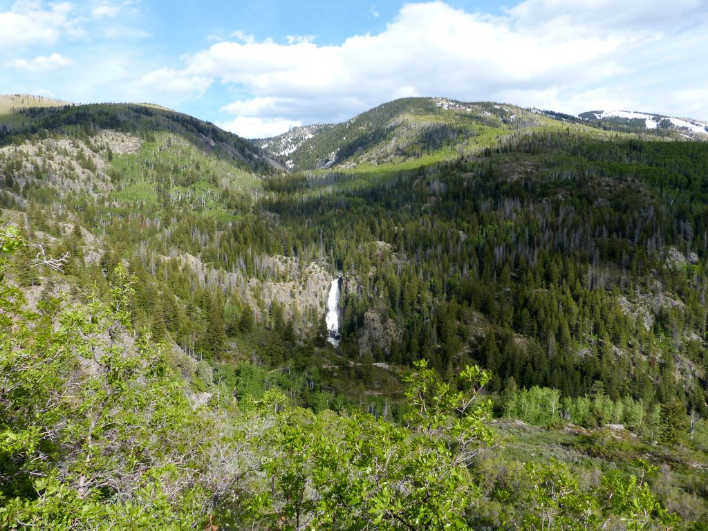 Fish Creek Falls in Steamboat Springs. This is the waterfall that inspired the original 1937 Coors Beer can. The falls are really rushing right now.