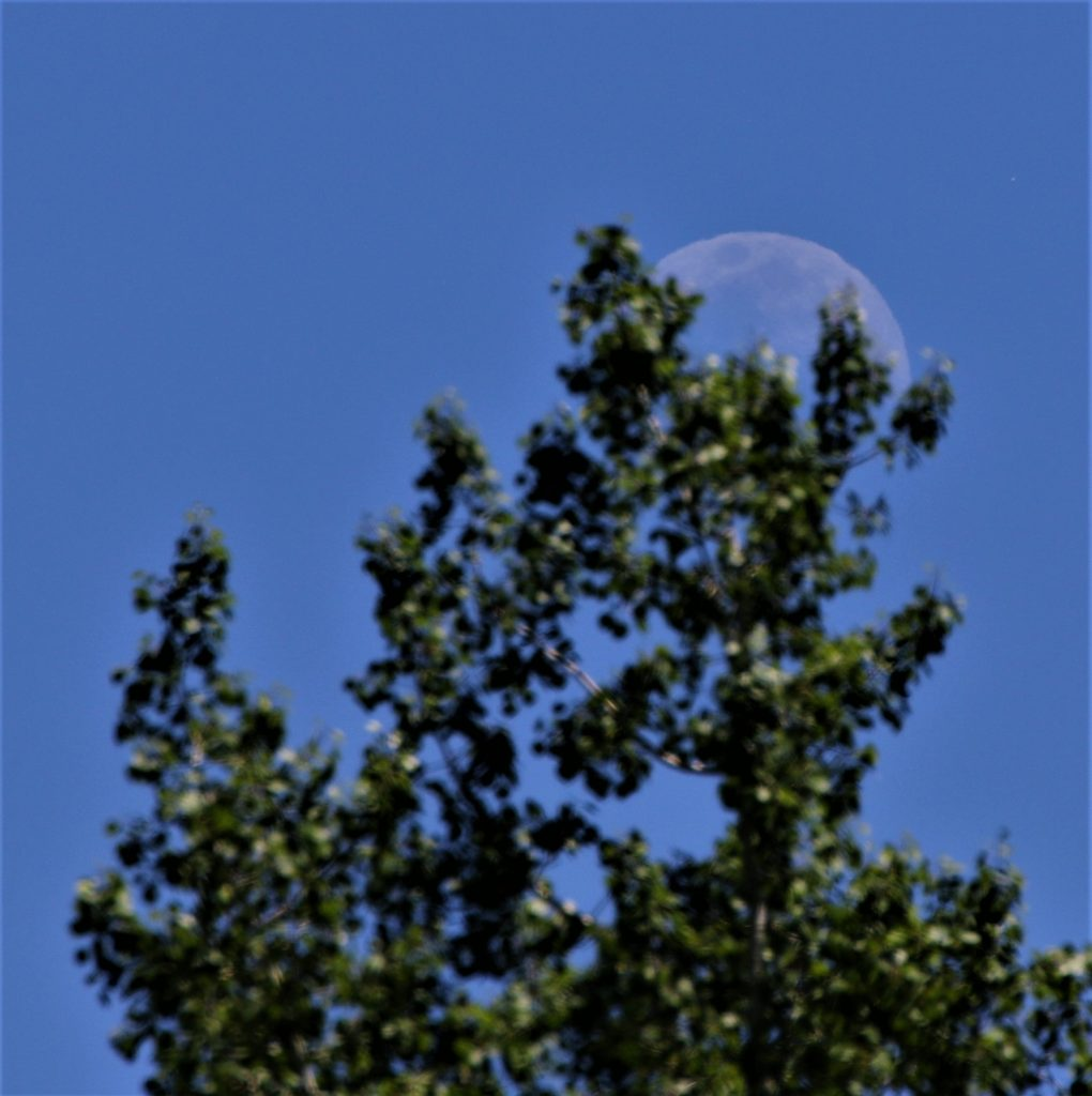 The moon rises behind a tree.