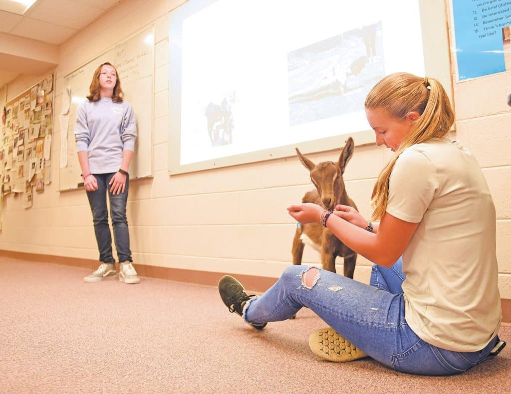Goat visits Steamboat Springs High School as part of business plan presentation 1