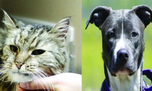 Routt County adoptable pets: Dina the cat and Roxy the dog